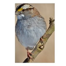 White-throated Sparrow Postcards (Package of 8)