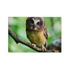 Northern Saw-whet owl Rectangle Magnet
