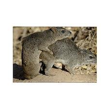 mating bush hyrax or yellow-spott Rectangle Magnet