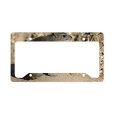 mating bush hyrax or yellow-s License Plate Holder