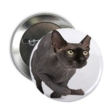 "Sphynx (11 months old) 2.25"" Button"