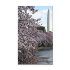 Peal bloom cherry blossom fra Rectangle Car Magnet
