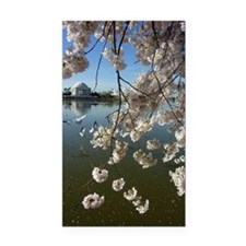Seagulls Fly Under Peal bloom Rectangle Car Magnet