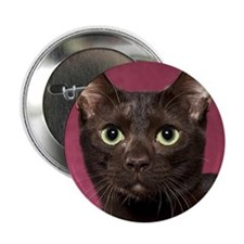 "Havana Brown Cat Ornament 2.25"" Button"
