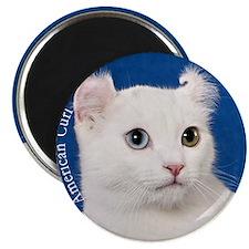American Curl Ornament Magnet