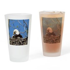 Mama Eagle Looking at Eaglet Drinking Glass