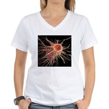 Stem cell, SEM Shirt