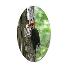 Pileated Woodpecker Wall Decal
