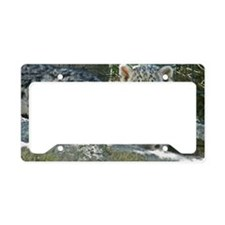 2 baby snow leopards License Plate Holder