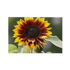 Sun Flower Rectangle Magnet
