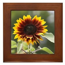 Sun Flower Framed Tile