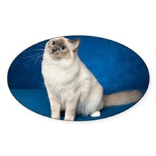 Birman Cat Note Card Decal