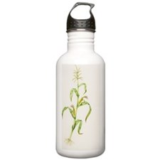 Maize (Zea mays) Water Bottle