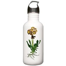 Primula auricula 'Siri Water Bottle