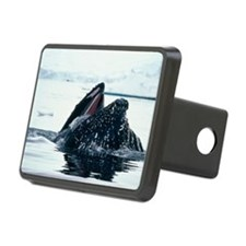 Humpback whale Hitch Cover