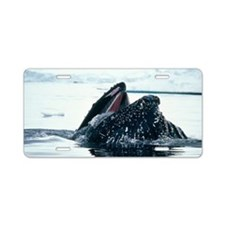 Humpback whale Aluminum License Plate