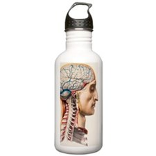 Brain blood vessels Water Bottle