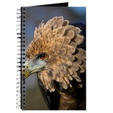 Juvenile bateleur eagle Journal