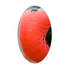 Male great frigate bird Oval Car Magnet