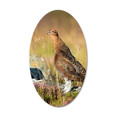 Male red grouse calling 35x21 Oval Wall Decal