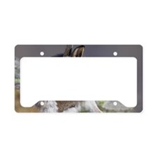 Mountain hare moulting License Plate Holder