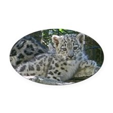 Snow Leopard Cub Oval Car Magnet