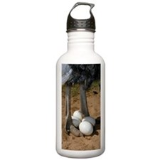 Ostrich with eggs Water Bottle
