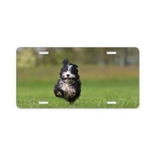 Havanese puppy running Aluminum License Plate