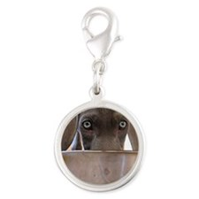 Blue Eyed Weimaraner Eating Silver Round Charm