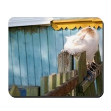 Cat stretching on fence Mousepad