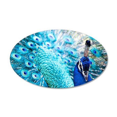 A peacock fans its tail in c 35x21 Oval Wall Decal