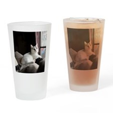 White Munchkin male kitten sitting  Drinking Glass