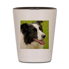 Border collie with tongue out. Shot Glass