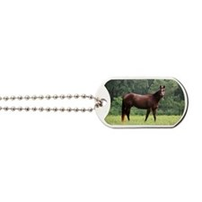Beautiful horse Dog Tags