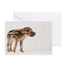 Baby boar standing Greeting Card