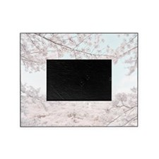 cherry blossoms Picture Frame