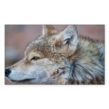 Profile of Wolf Decal