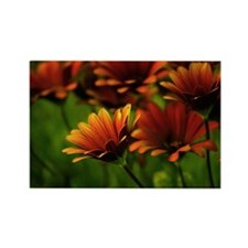 Orange flowers Rectangle Magnet