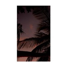 Palm tree on beach at sunset Decal
