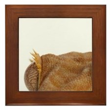 Portrait of crested gecko lizard Framed Tile