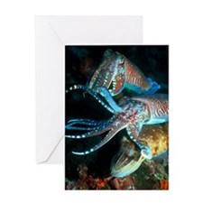Pharaoh cuttlefish Greeting Card