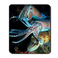 Pharaoh cuttlefish Mousepad