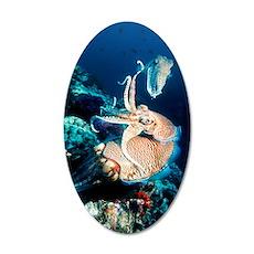 Pharaoh cuttlefish 35x21 Oval Wall Decal