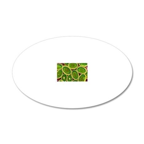 Plankton cell wall, SEM 20x12 Oval Wall Decal