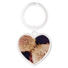 Dividing HeLa cells, SEM Heart Keychain