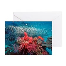 Pygmy sweeper fish Greeting Card