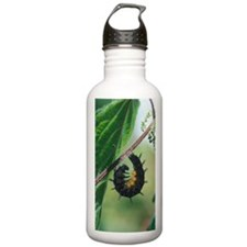Red admiral caterpilla Water Bottle