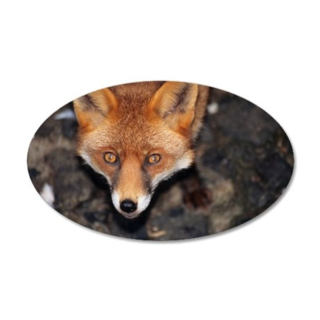 Red fox 35x21 Oval Wall Decal