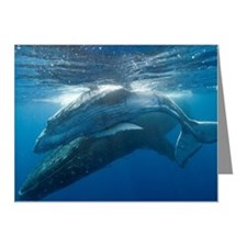 Humpback Whales Note Cards (Pk of 10)