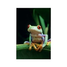 Red-eyed tree frog Rectangle Magnet